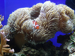 Click image for larger version  Name:nemo.jpg Views:1 Size:31.4 KB ID:22177