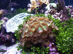 Click image for larger version  Name:coral.jpg Views:1 Size:37.6 KB ID:22178